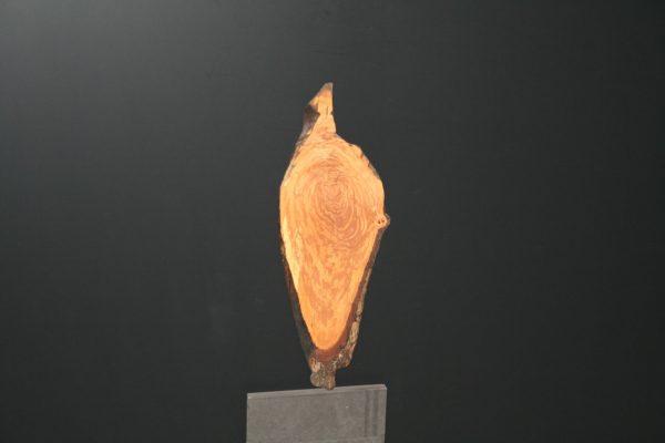 Wandbild Elsbeere