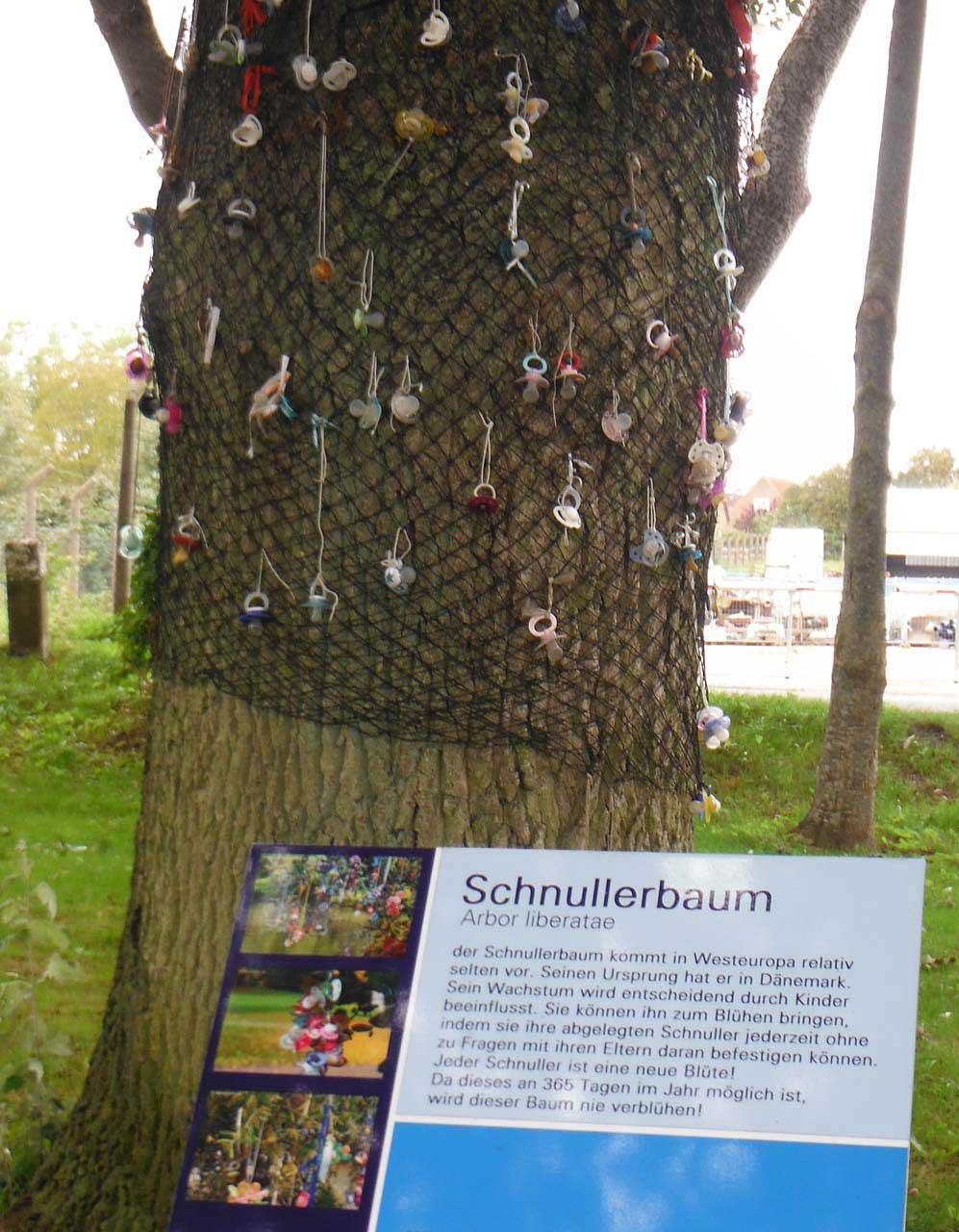 Schnullerbaum Arbor liberatae