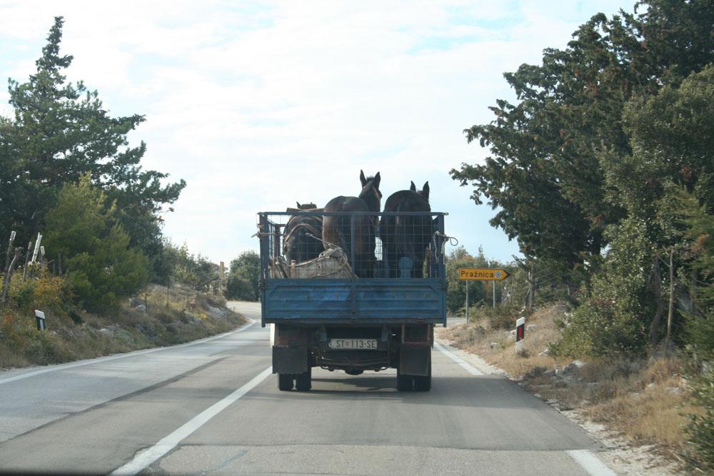 Eseltransport in Kroatien auf der Ladefläche