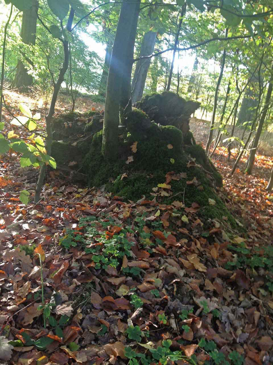 Lüneburger Heide Herbststimmung